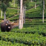 mudumalai tiger reserve tour package