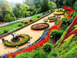 ooty botanical garden tour packages