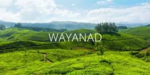 ooty wayanad tour packages